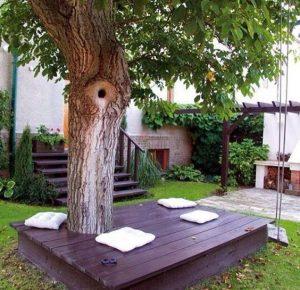 Terasa in jurul copacului